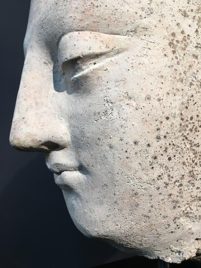 Gandharan Stucco Head of the Buddha, 3rd-5th Century For Sale 3