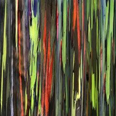 Rainbow Eucalyptus /Kauai