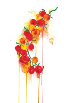 Gavin Dobson, Tomato Vine, Affordable Art, Kitchen Art, Contemporary Art