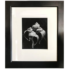 Gelatin Print of Four Conch Shells in Continuous Frame