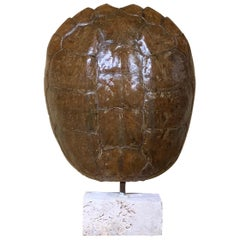 Genuine American Fresh Water Snapping Turtle Shell
