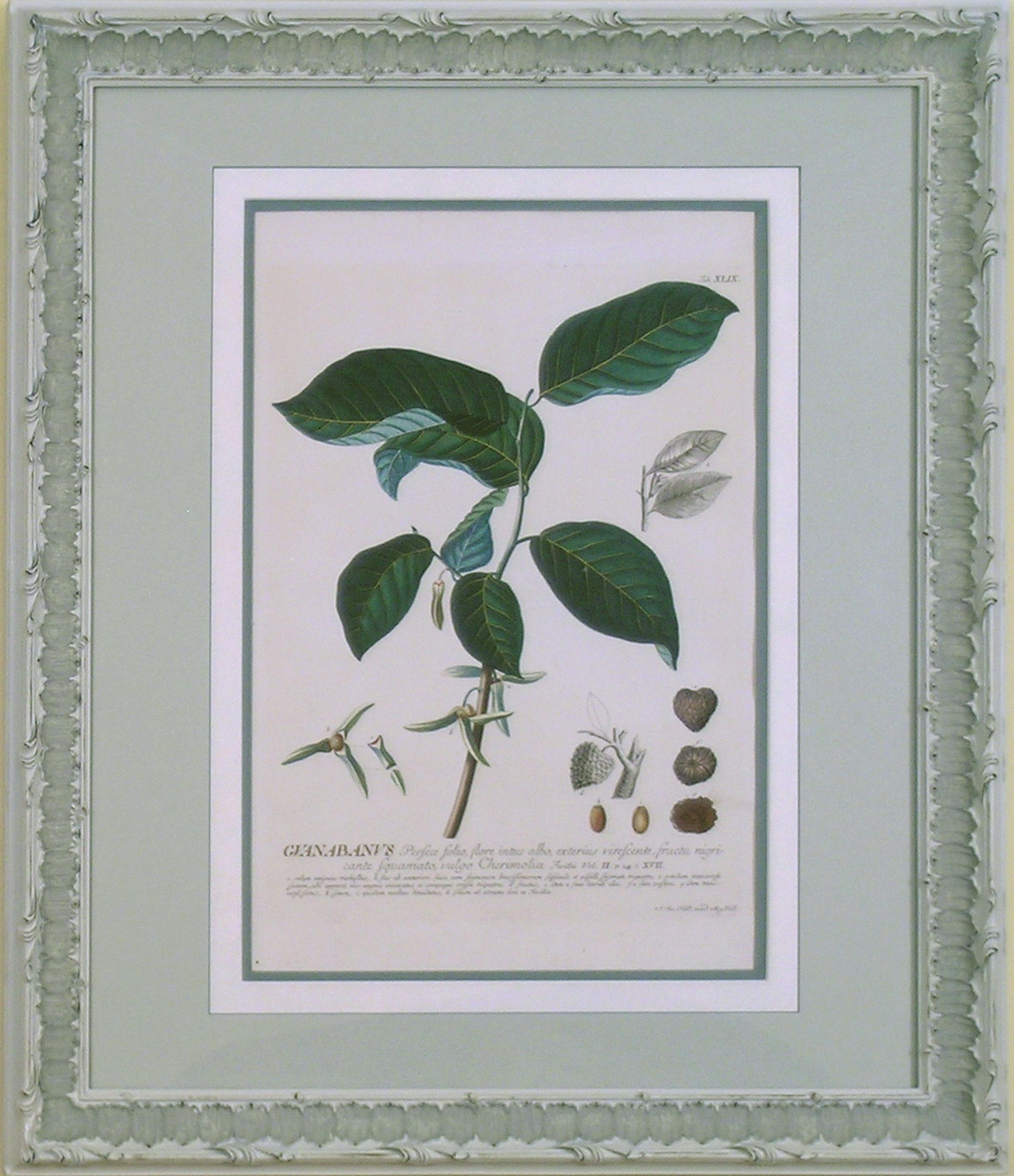 Guanabanus (Guabana or Soursop Fruit)