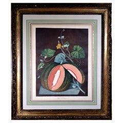 George Brookshaw Engraving of A Melon, Plate LXV, White Seeded Rock