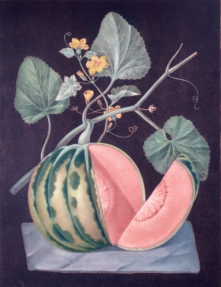 George Brookshaw Engraving of A Melon, Plate LXVIII, Polinac, From 'Pomona Britannica, or, A Collection of the Most Esteemed Fruits', Circa 1812.   This aquatint engraving, with some stipple, was printed in color and finished by hand and with