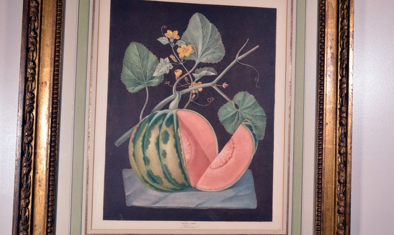 Paper George Brookshaw Engraving of a Melon, Plate Lxviii, Polinac, Pomona Britannica For Sale