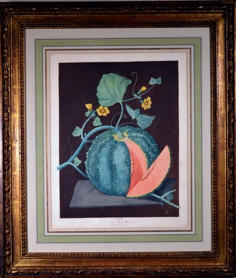 Regency George Brookshaw Pair of Engravings of Melons, Plates 66 and 67