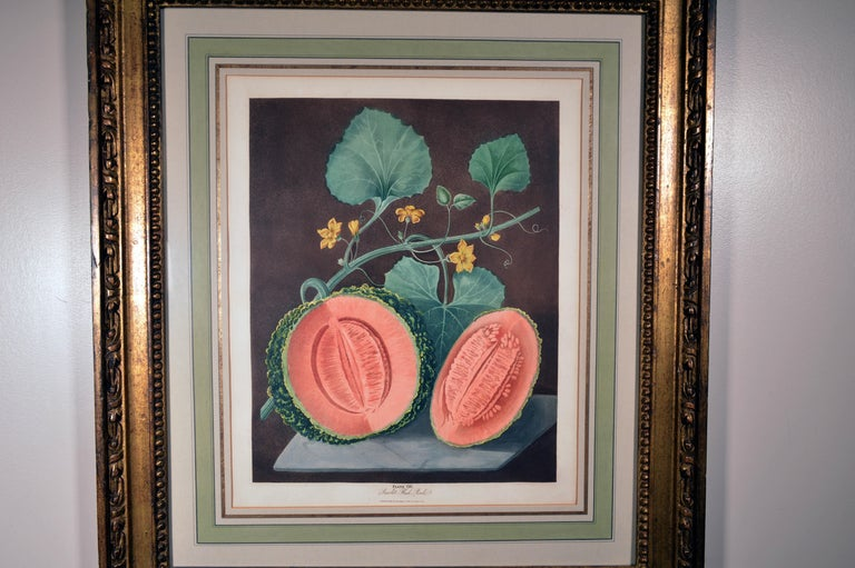 Paper George Brookshaw Pair of Engravings of Melons, Plates 66 and 67