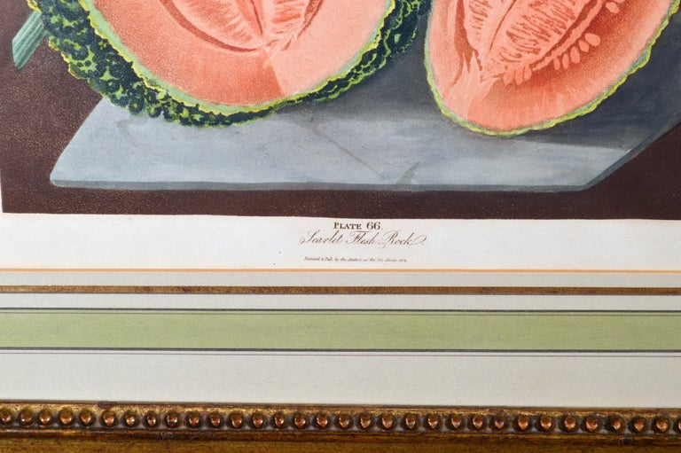 George Brookshaw Pair of Engravings of Melons, Plates 66 and 67 1