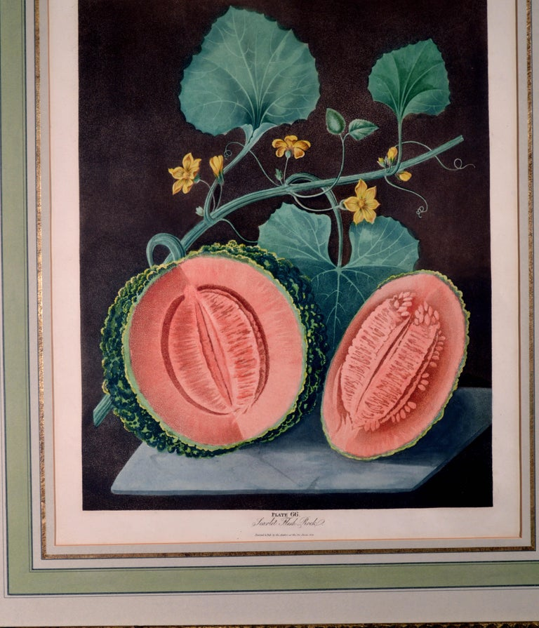 George Brookshaw Pair of Engravings of Melons, Plates 66 and 67 2