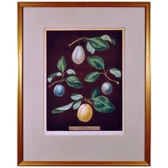 George Brookshaw Print of Four Varieties of Plums, Plate XVII, Dated 1806