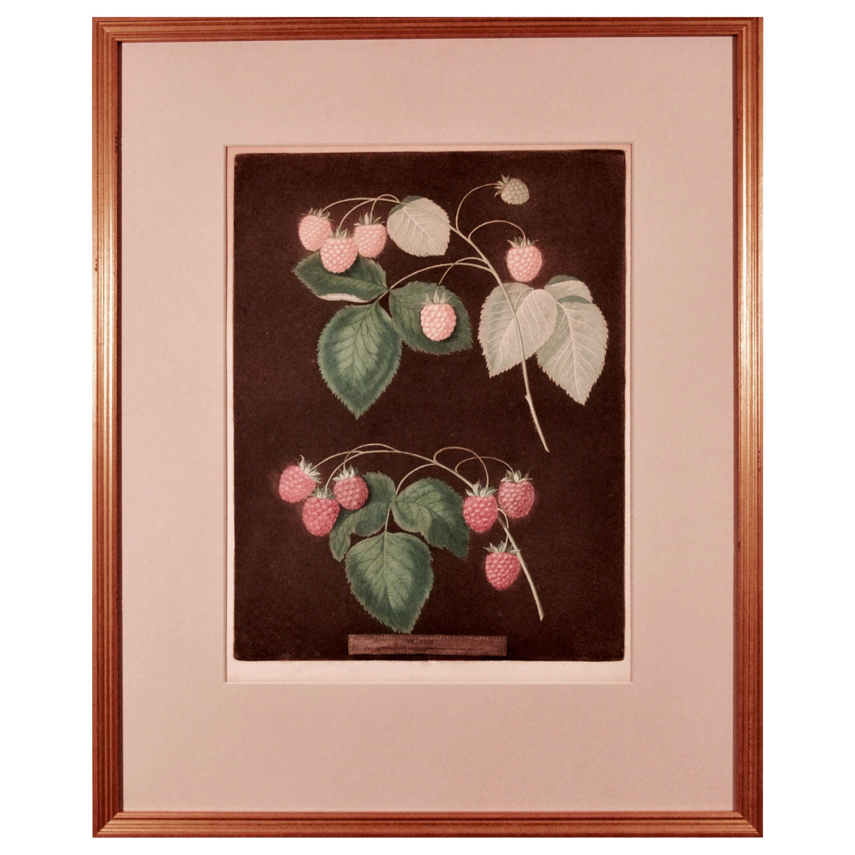 george brookshaw Print of Two Varieties of Raspberries, One Yellow and One Red