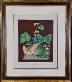 """Amicua Melon"" Hand Finished Color Engraving by George Brookshaw"