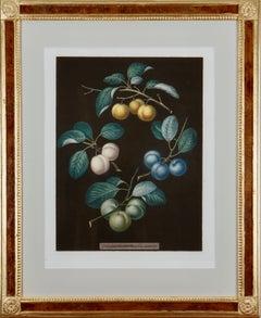 "George Brookshaw: ""Pomona Britannica"" Framed Painting, 1812"