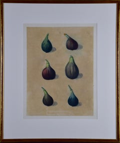 "George Brookshaw's Matted Figs Aquatint from ""Pomona Brittanica"""