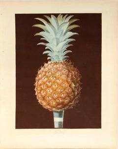 George Brookshaw, Pair of Pineapples, Aquatint, 1812