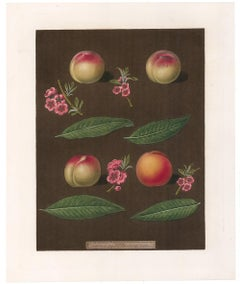 Peaches by George Brookshaw