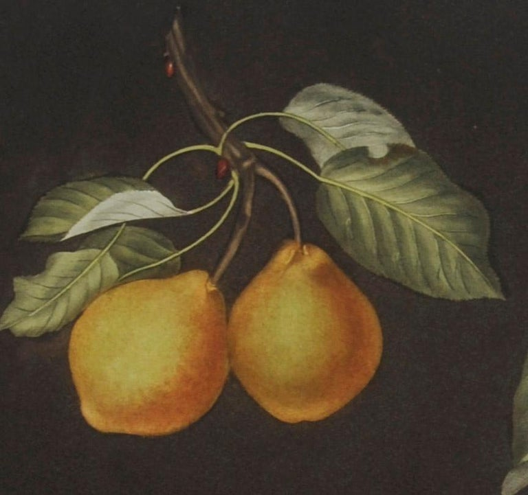 Plate LXXVIII  Pears (Valley, Petit Russelet, Doyenne, or Saint Michael, ... - Print by george brookshaw