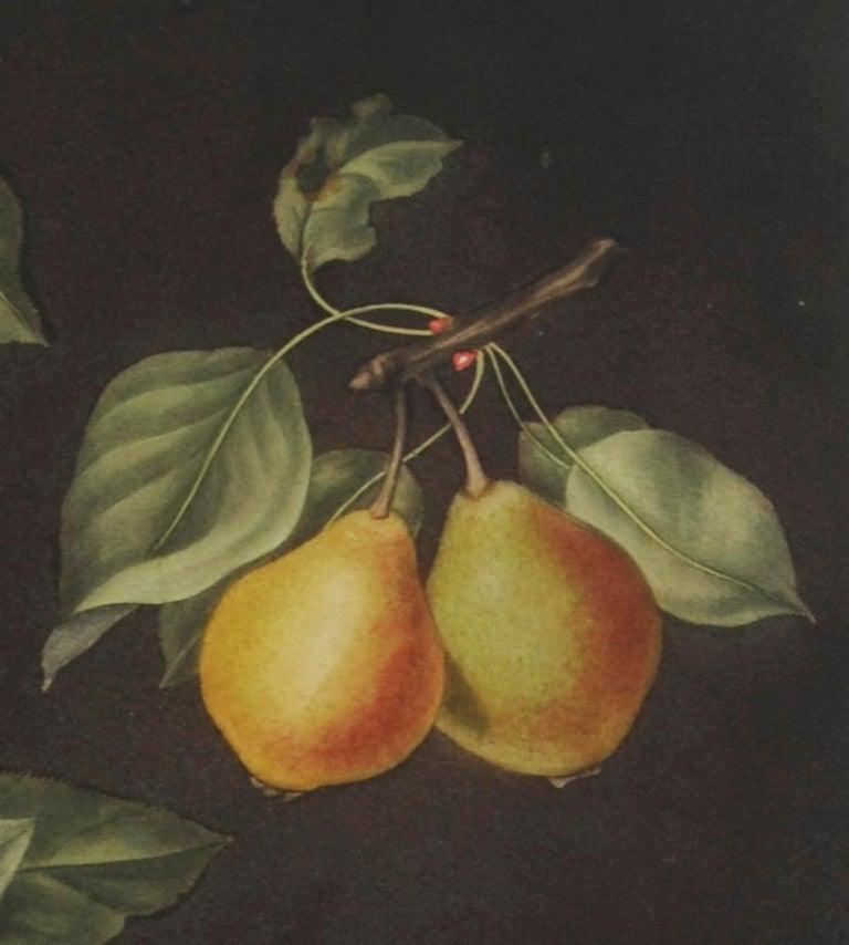 Plate LXXVIII  Pears (Valley, Petit Russelet, Doyenne, or Saint Michael, ... - English School Print by george brookshaw