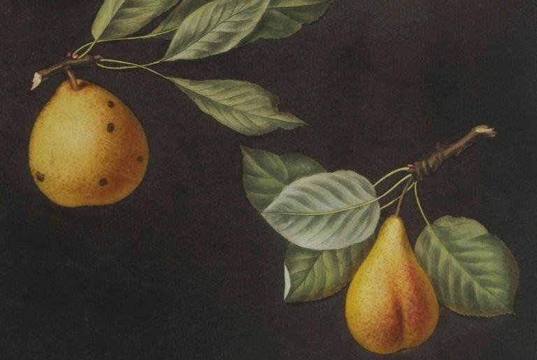 Plate LXXVIII  Pears (Valley, Petit Russelet, Doyenne, or Saint Michael, ... - Black Still-Life Print by george brookshaw