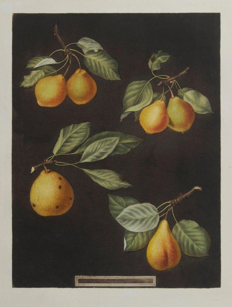 george brookshaw Still-Life Print - Plate LXXVIII  Pears (Valley, Petit Russelet, Doyenne, or Saint Michael, ...