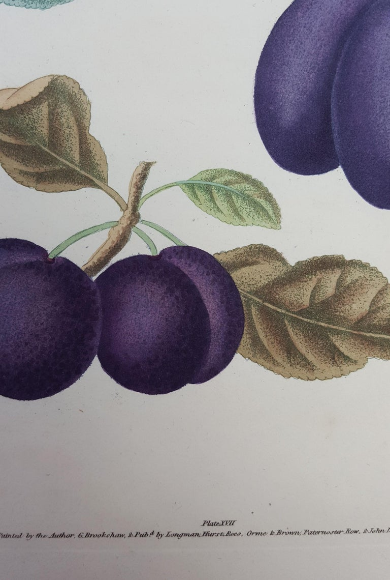 Plums (Plate XVII) For Sale 13