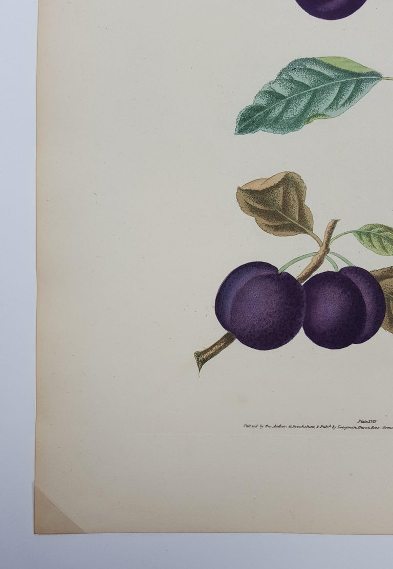 An original hand-colored aquatint engraving on wove paper by English artist George Brookshaw (1751-1823) titled