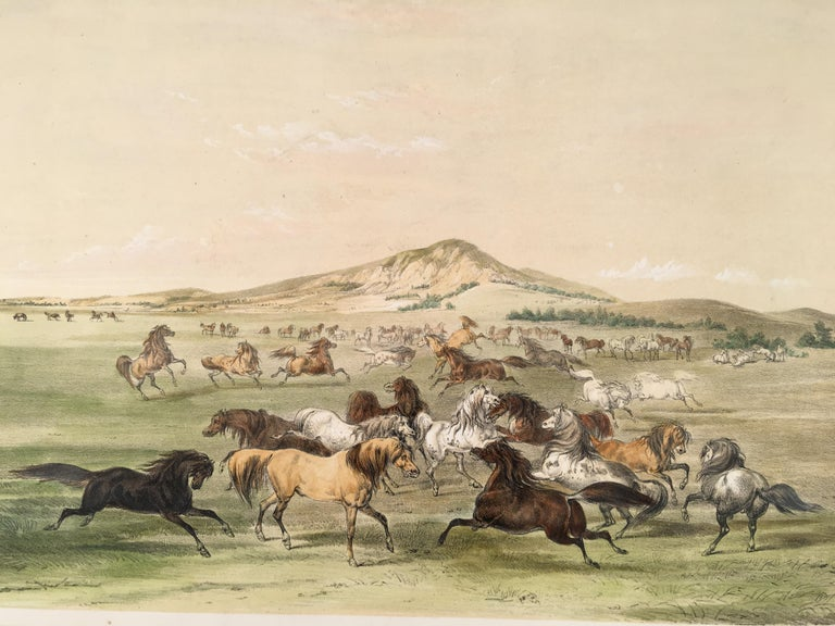 Wild Horses, At Play - Print by George Catlin