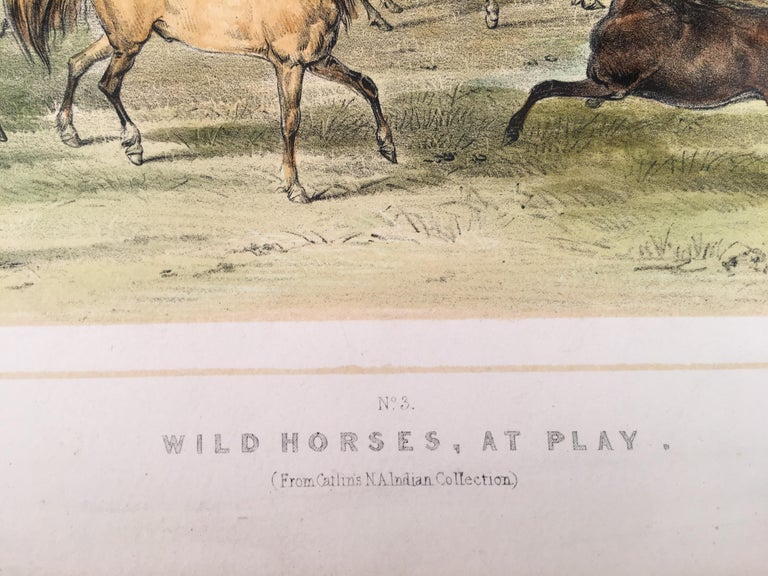 Wild Horses, At Play - Realist Print by George Catlin