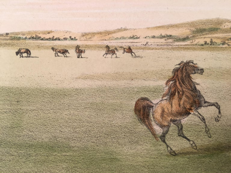 Wild Horses, At Play For Sale 1