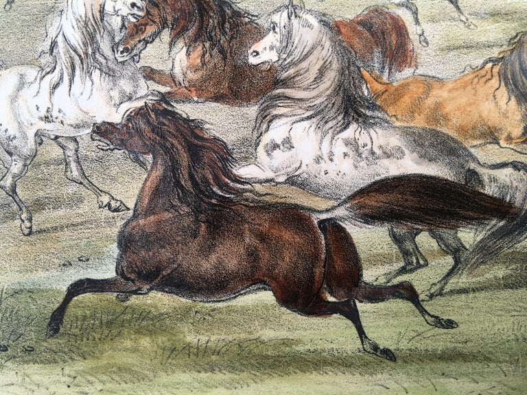 Wild Horses, At Play For Sale 2