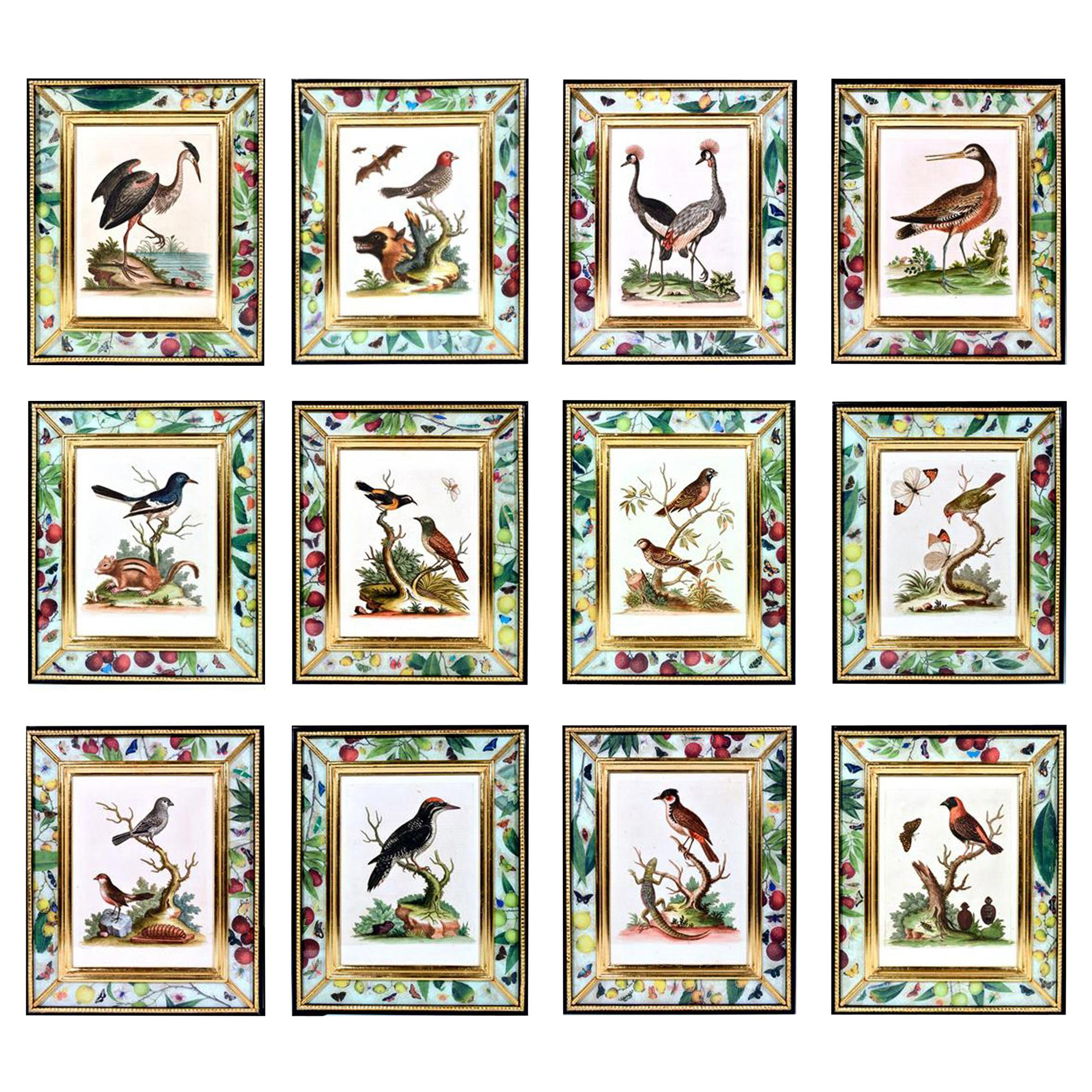 George Edwards Engravings of Birds, Set of Twelve, circa 1740-1760