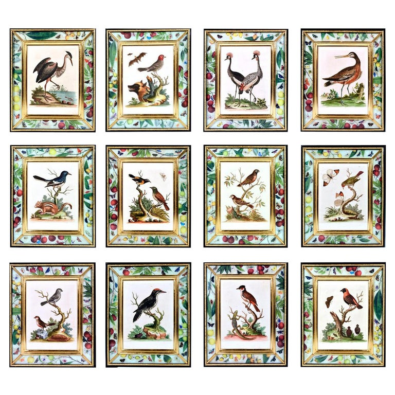 George Edwards Engravings of Birds, Set of Twelve, circa 1740-1760 For Sale