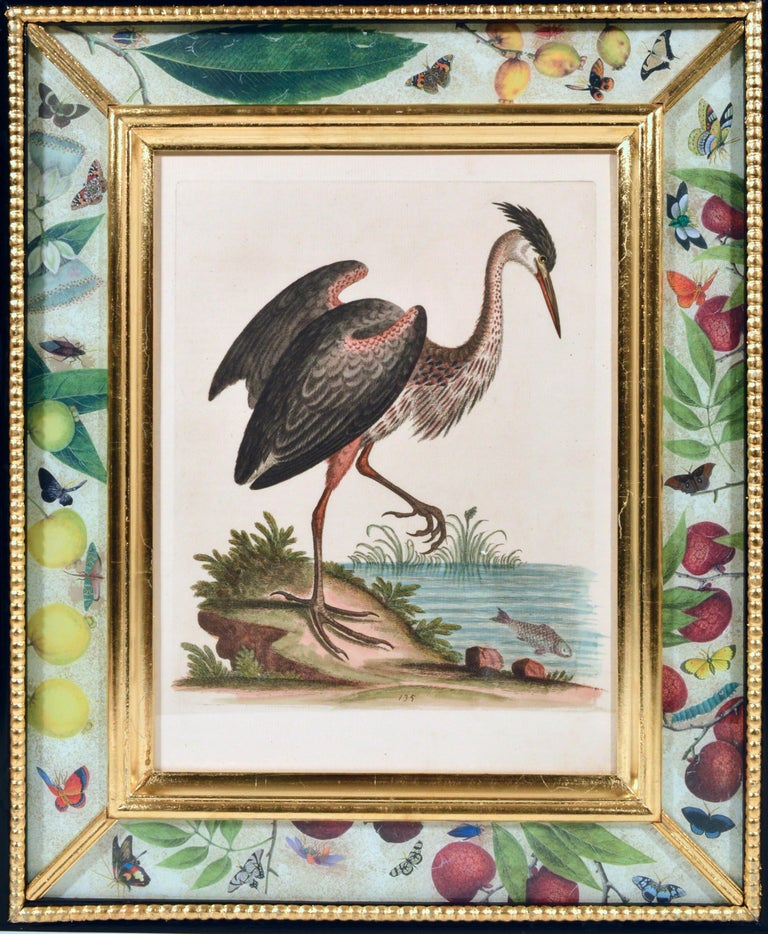 George Edwards Engravings of Birds, Set of Twelve, circa 1740-1760 For Sale 5