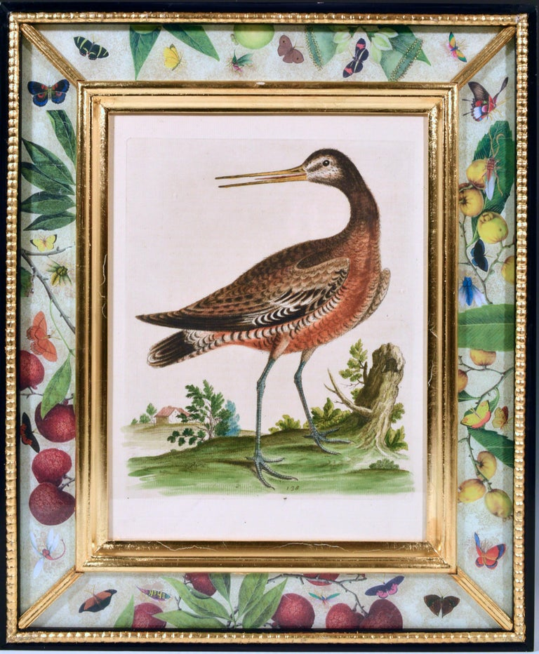 George Edwards Engravings of Birds, Set of Twelve, circa 1740-1760 For Sale 6