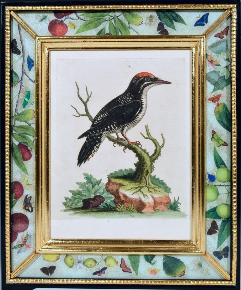 George Edwards engravings of birds,