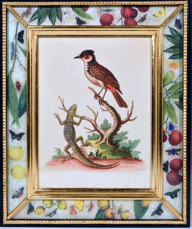 Georgian George Edwards Engravings of Birds, Set of Twelve, circa 1740-1760 For Sale