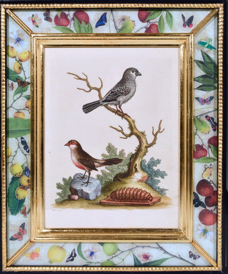 English George Edwards Engravings of Birds, Set of Twelve, circa 1740-1760 For Sale