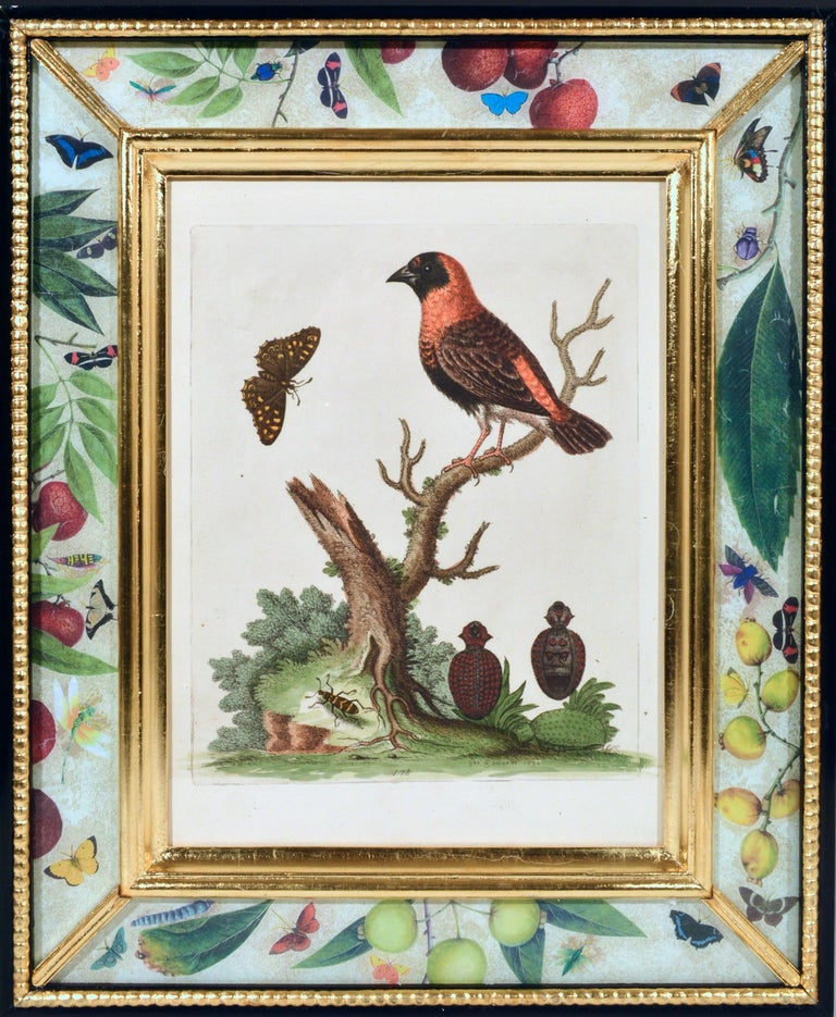 George Edwards Engravings of Birds, Set of Twelve, circa 1740-1760 In Good Condition For Sale In Downingtown, PA