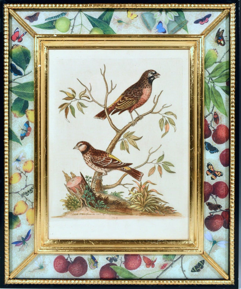 Paper George Edwards Engravings of Birds, Set of Twelve, circa 1740-1760 For Sale