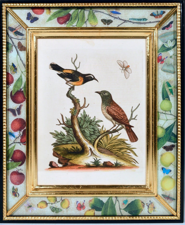 George Edwards Engravings of Birds, Set of Twelve, circa 1740-1760 For Sale 1