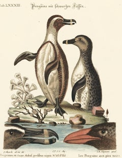 Hand-Colored Penguin Engraving