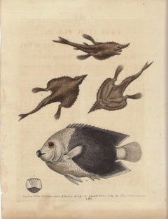 """Vintage Print, Brasiliean Fishes from """"A Natural History of Uncommon Birds..."""""""