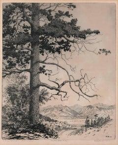 Old Pine Estes Park