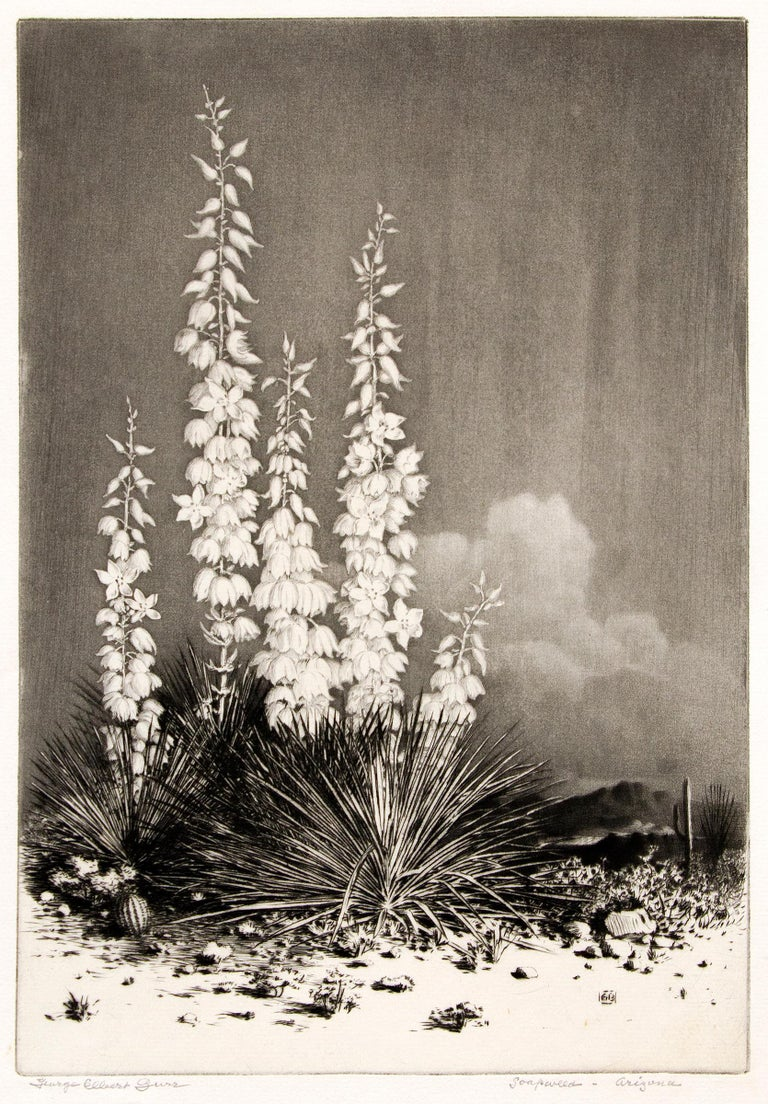 Soapweed, Arizona (no. 2); edition of 40 (original etching from the Desert Set) - Print by George Elbert Burr