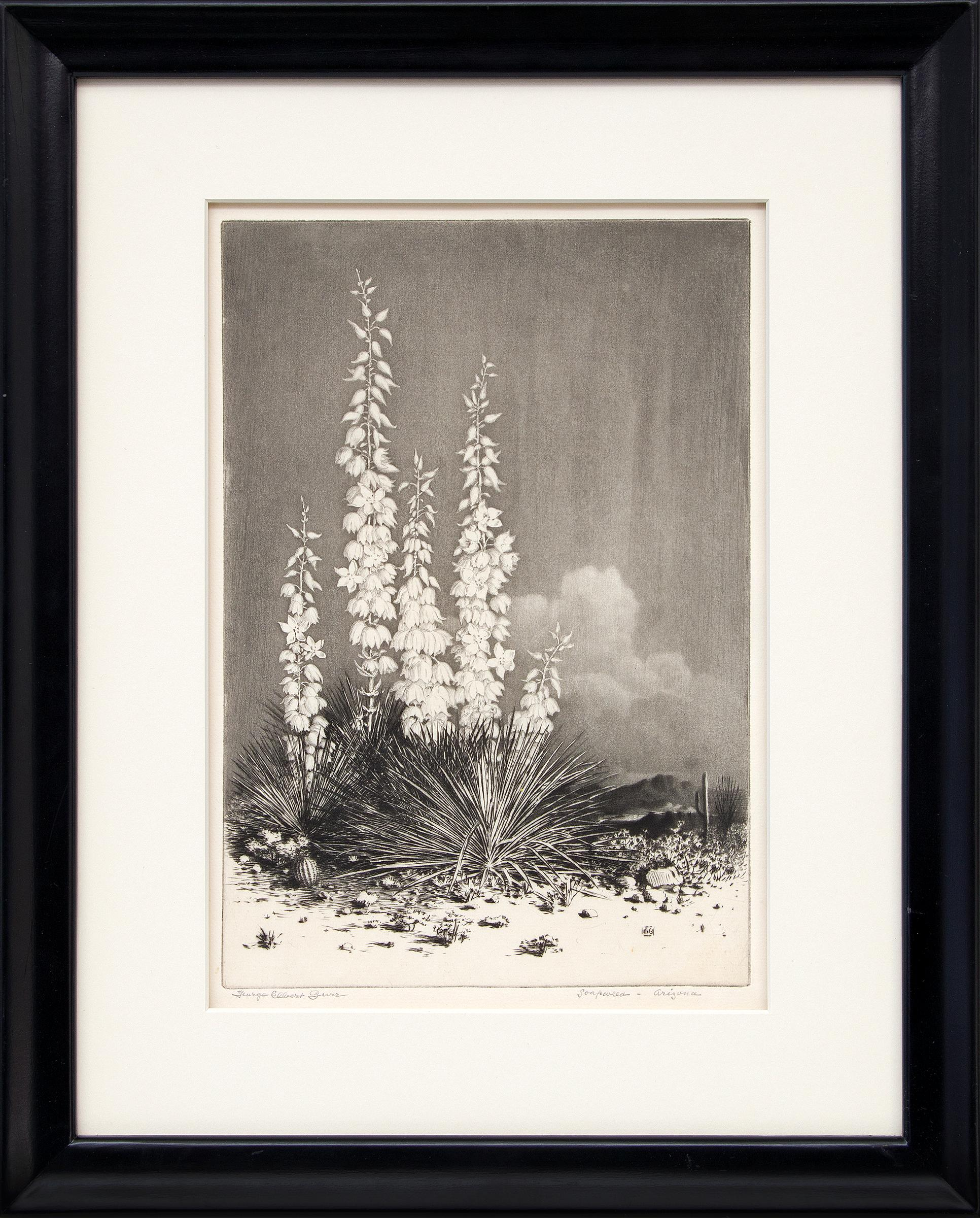 Soapweed, Arizona (no. 2); edition of 40 (original etching from the Desert Set)