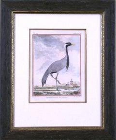 La Demoiselle de Numidie (Crane)