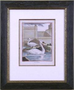 Le Cygne (Swan)