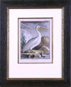 Le Pelican (Pelican)