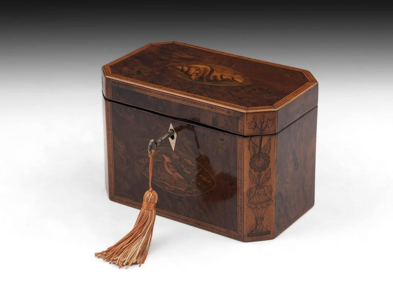 Georgian Antique Burr Yew Conch Shell Tea Caddy, 18th Century For Sale 5
