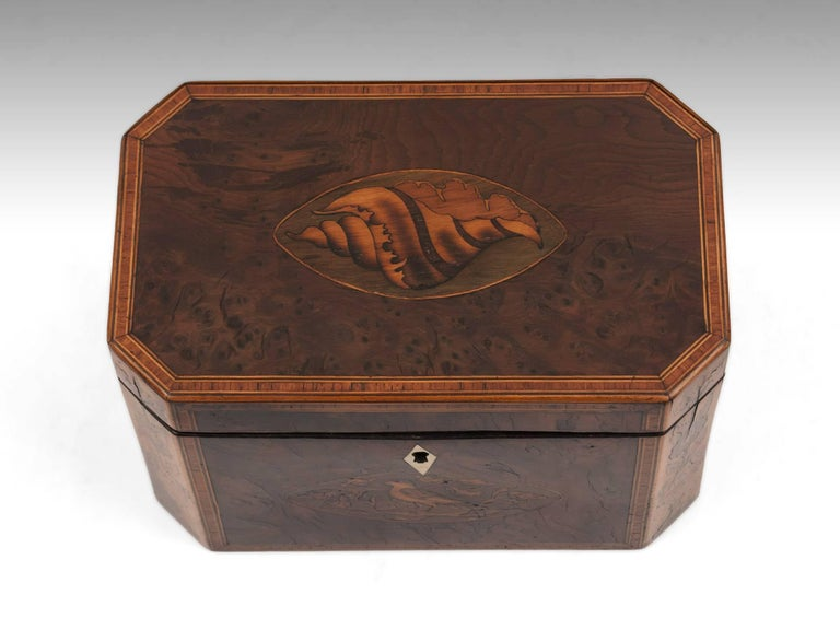 Antique burr yew tea caddy with an inlaid conch shell to the top, a bird surrounded by oak leaves on the front with a kite shaped bone escutcheon and its cants inlaid with tea plants. 